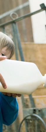 Calf l'alimentation des enfants