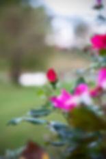 RoseSprings-1.jpg