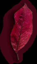 Leaf #5.png