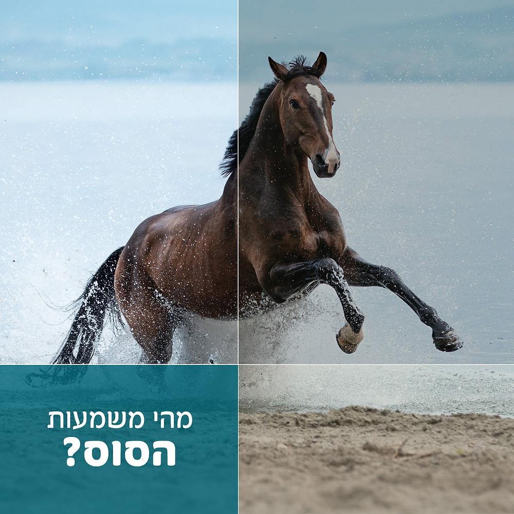 משמעות הסוס בעסק