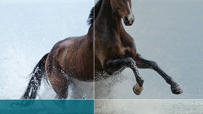 מהי משמעות הסוס?
