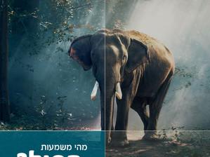 מהי משמעות הפיל
