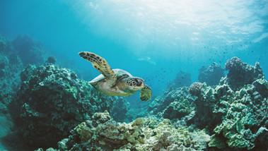 Convite para embarcar na Década do Oceano