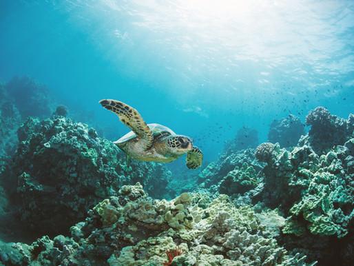 Goda nyheter: Trots kyla och mörker räddade volontärer tusentals sköldpaddor