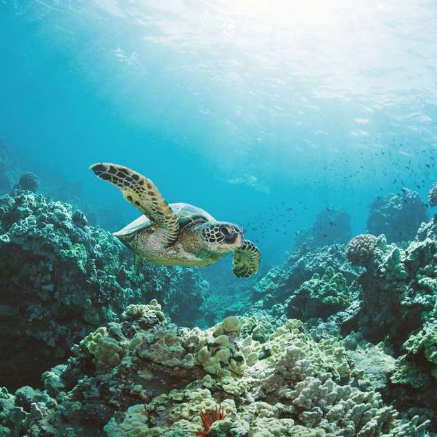 Sea Turtle Bahamas catamaran charters