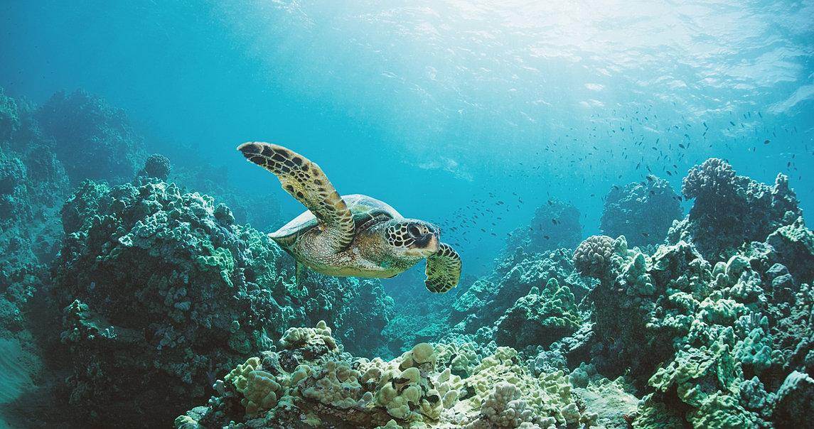 Global Turtle Family Tortoise Rescue   ADOPTION