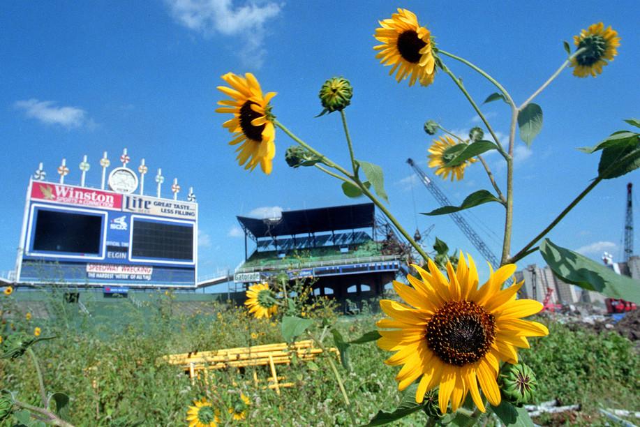 1991 Comiskey Sunflowers.jpg