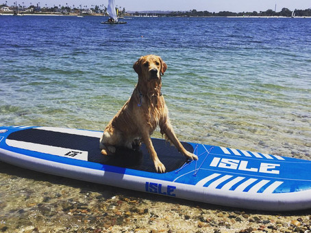 Teaching Your Dog How To Stand Up Paddleboard In 4 Simple Steps