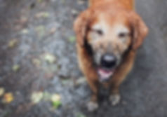 Hundefriseur Hundesalon lotte westerkappeln wallenhorst osnabrück