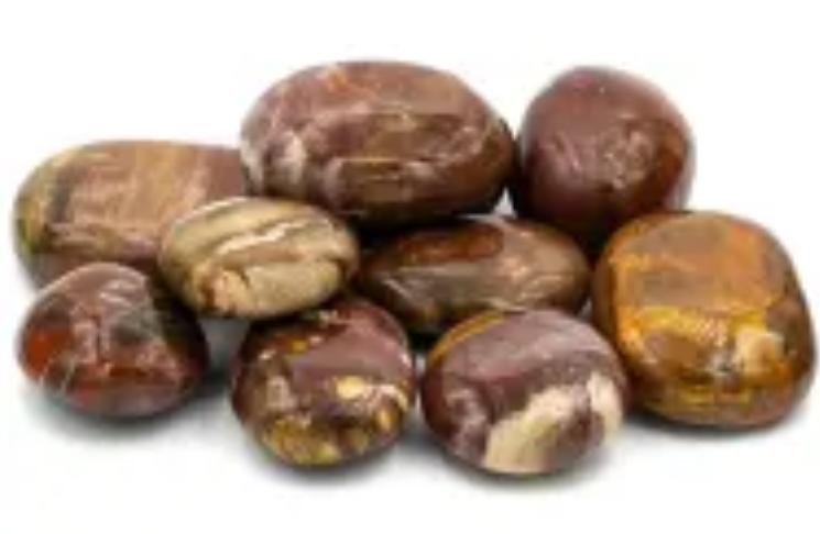 Galets de bois pétrifié ( fossilisé )