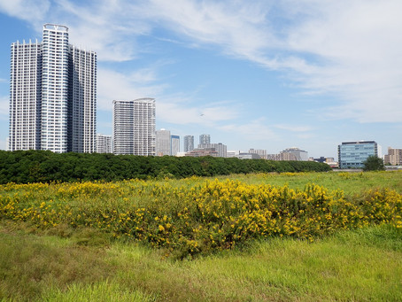 Why you should consider investing in vacant land