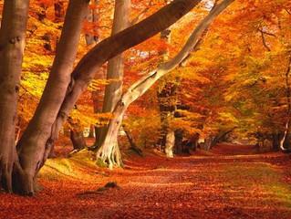 November Beautiful Autumn