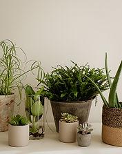 Plantes-vertes-atelier-liseron-fleuriste