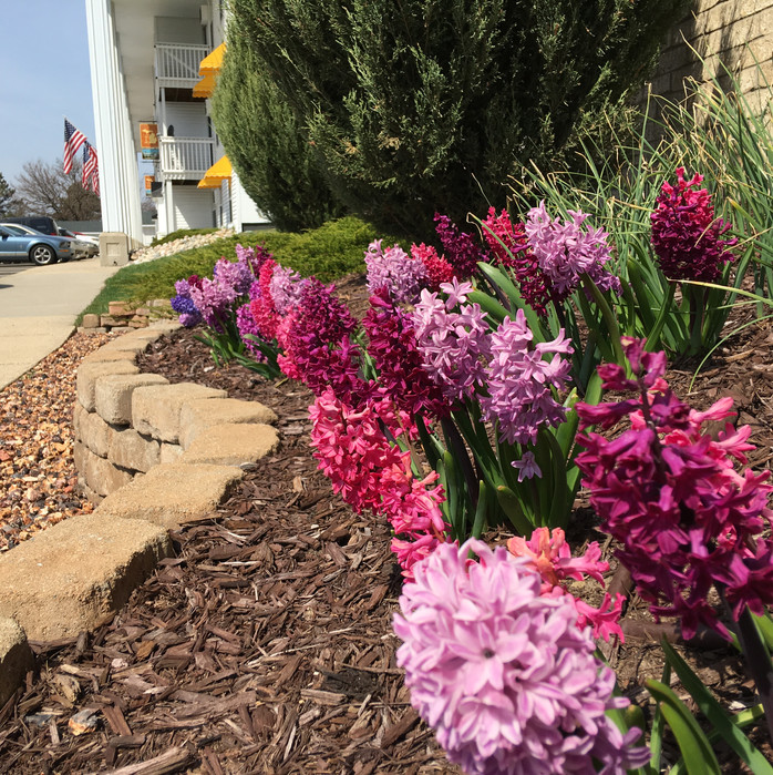 Heritage Apartments Landscaping