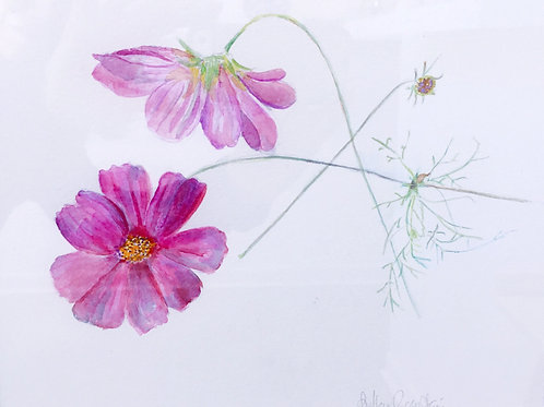 Watercolor; Botanical Illustration: Cosmos