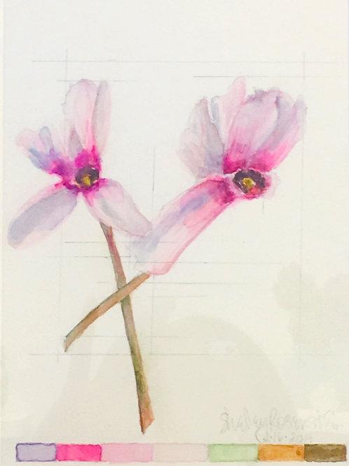 Watercolor; Botanical Illustration: Cyclamen