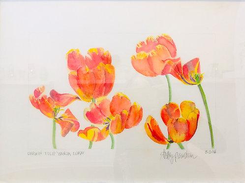 Watercolor; Botanical Illustration: Parrot Tulips