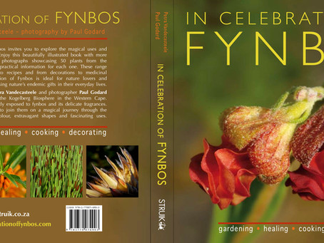 Fynbos... sexy and proudly South African