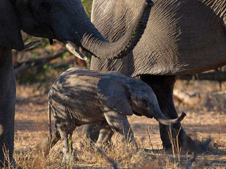 Rewilding Africa – Conservation in Action