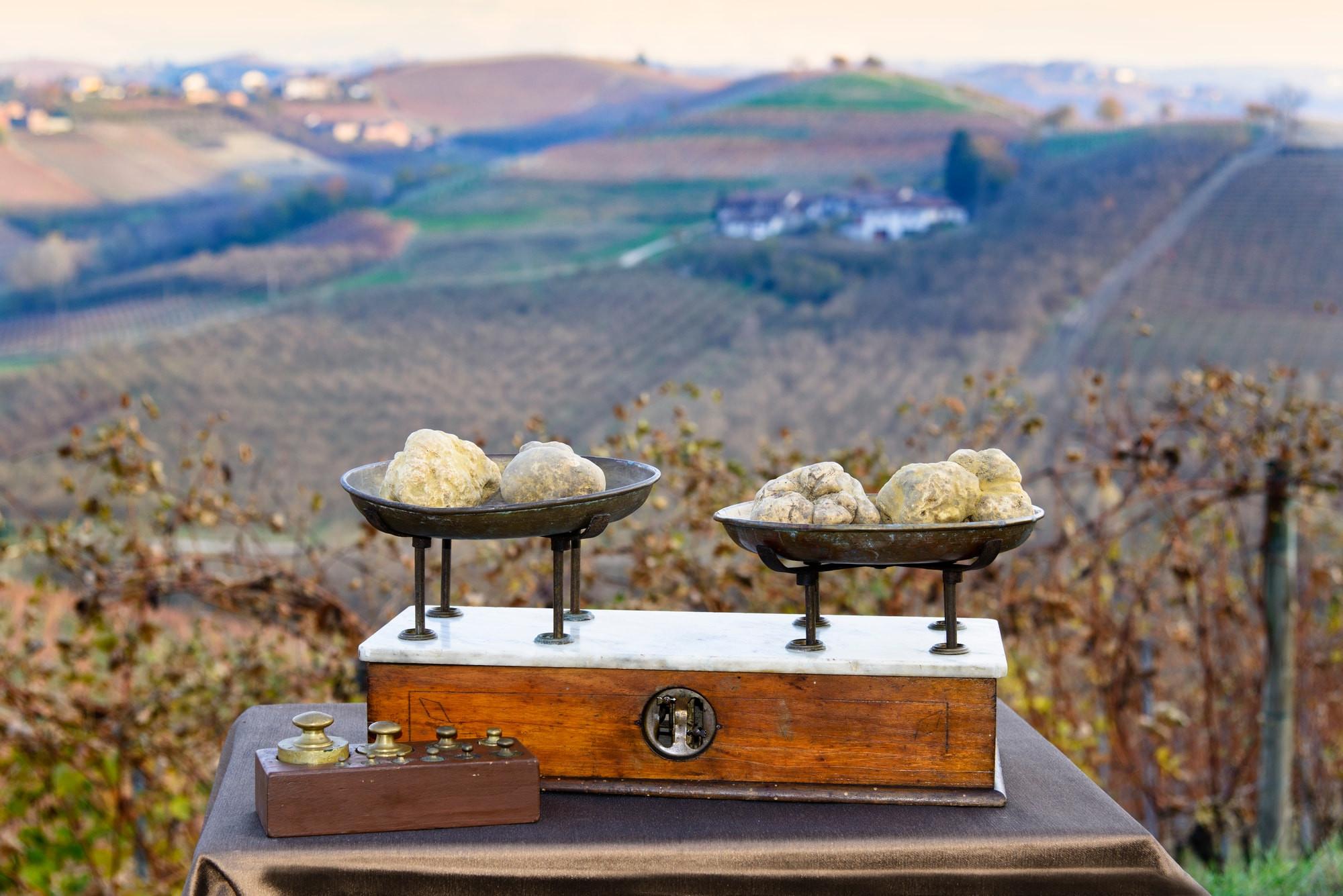 Witte truffel in Le Langhe