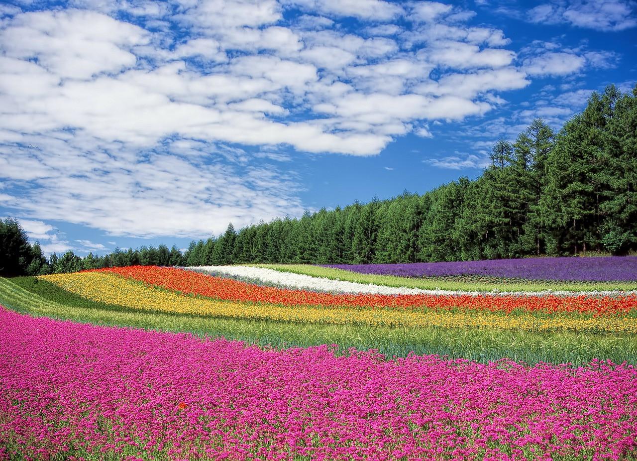 Kleuren van bloemen