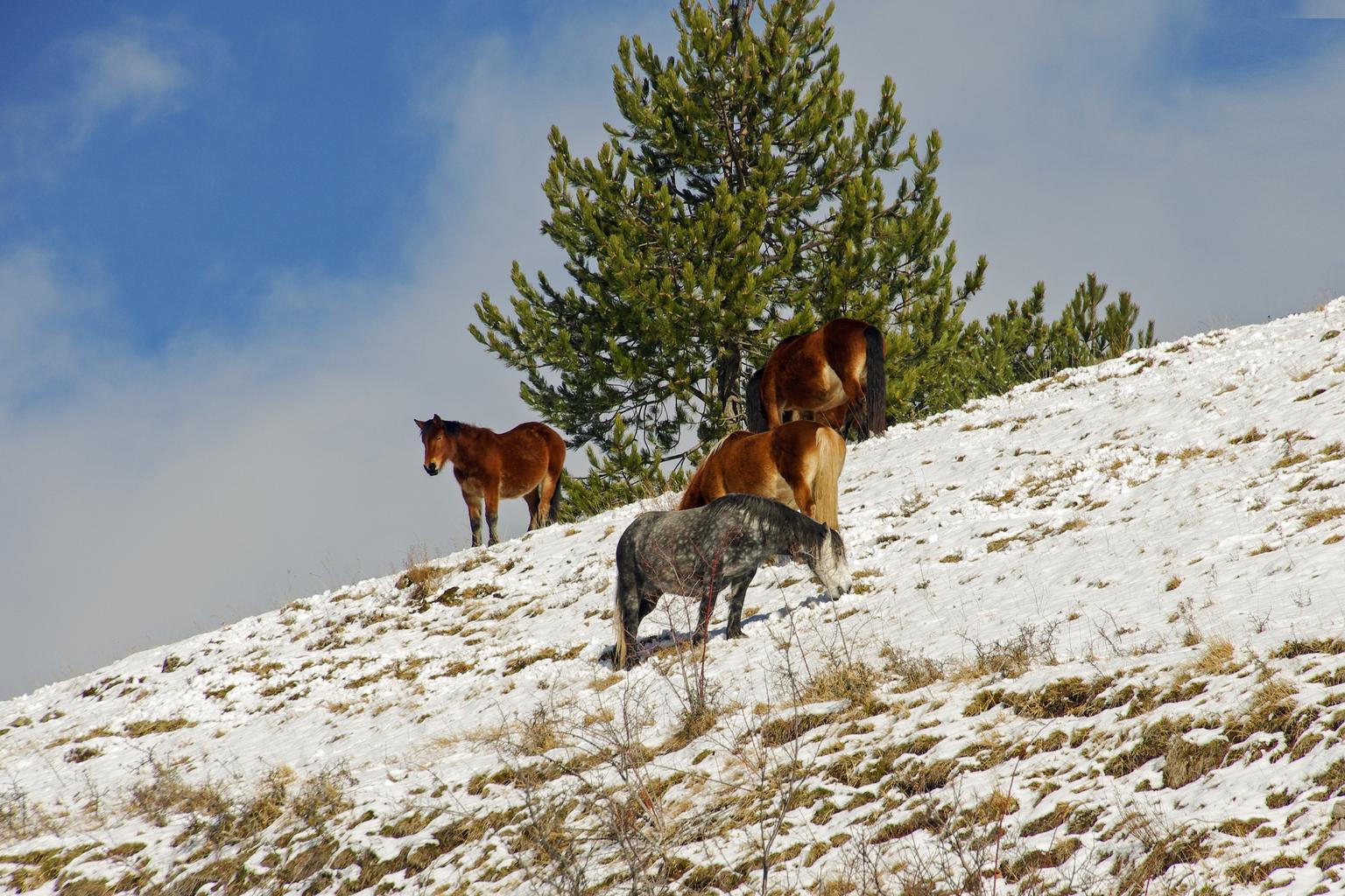 Wilde paarden in Monti Sibillini