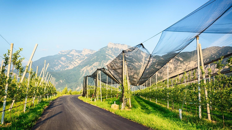 Boomgaard in Zuid Tirol