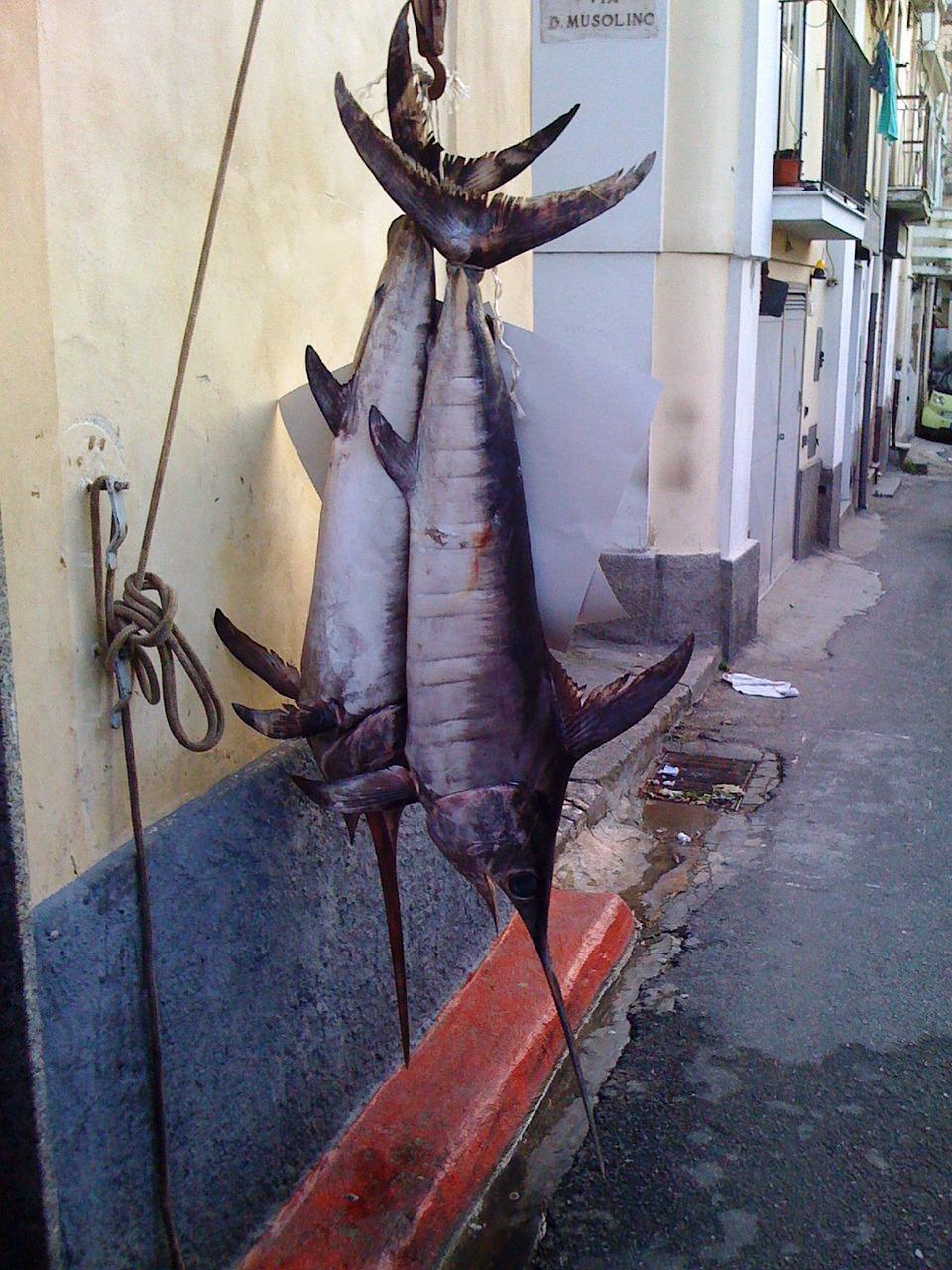 Zwaardvis gevangen in Calabrie
