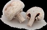 mushroom_2.png