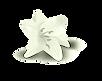 flor 2.png