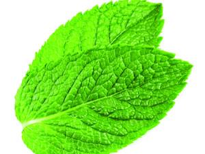 mint flavor