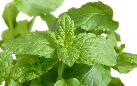 wintergreen flavor