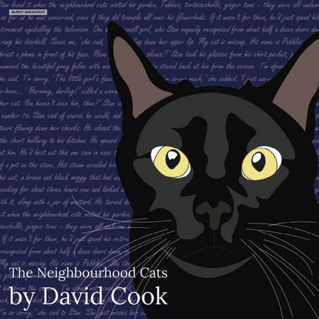 The Neighbourhood Cats | By David Cook