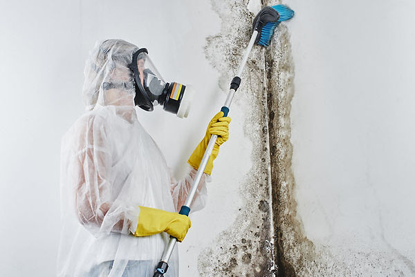 Mold Cleanup 3