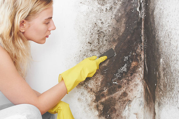 Home Mold Cleanup