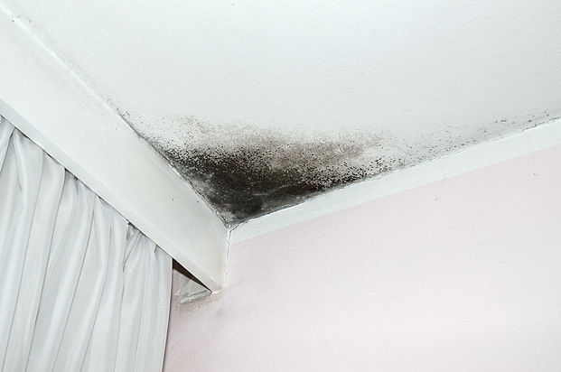 Top Rated Mold Removal