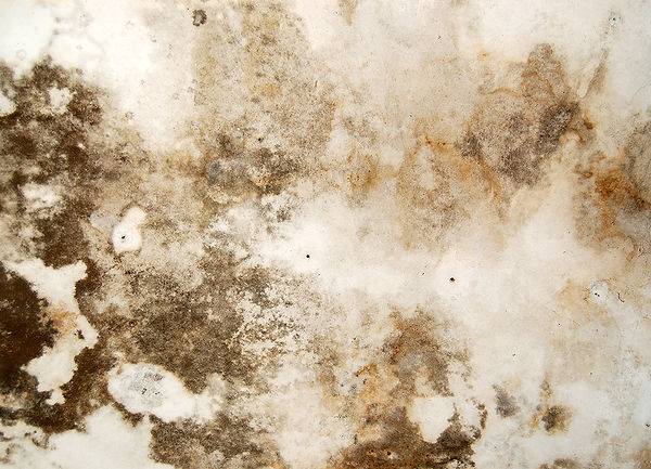 household mold, professional mold removal, DIY mold removal, mold cleanup, mold remediation