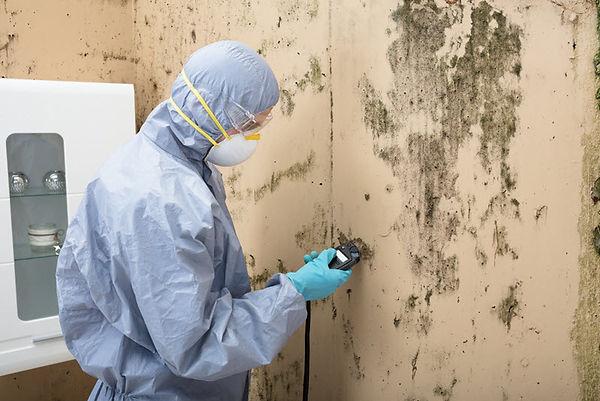 Mold Damage Repair 4