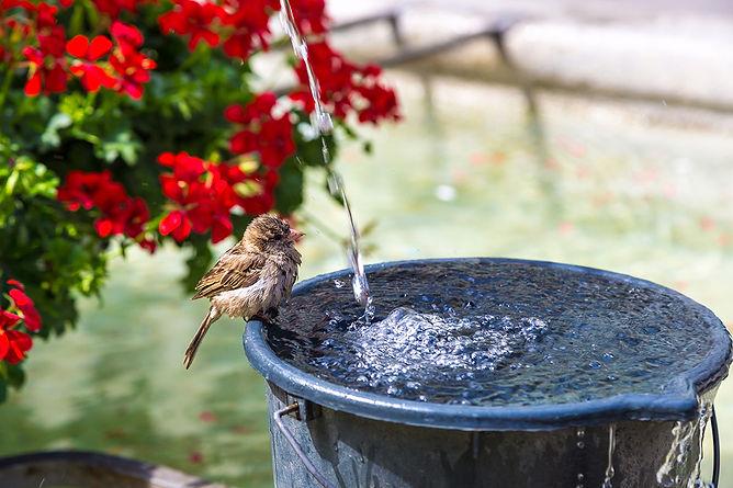 Keep Your Patio Bug Free Bird Bath