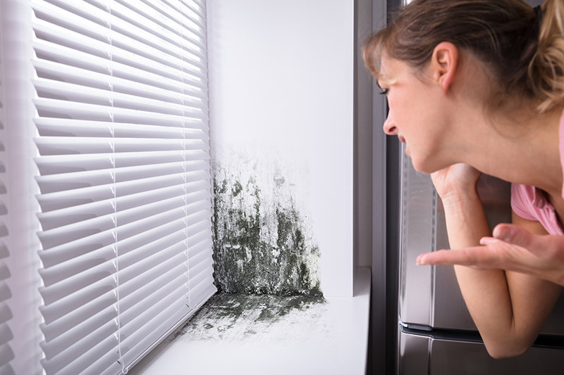 painting over mold, causes of mold growth, fix mold in the house, is mold dangerous