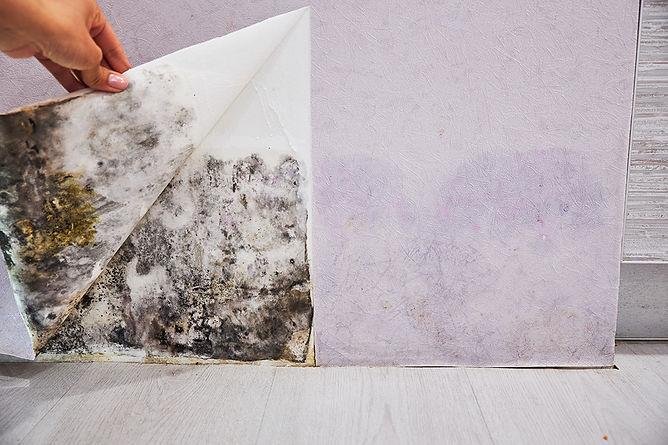Emergency Water Leak Guide Mold Under Wallpaper