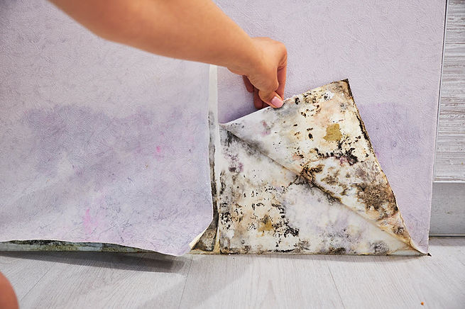 Mold Cleanup 1