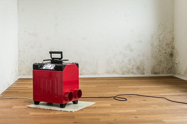 Affordable Mold Remediation 1