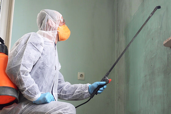 Common Home Problems Professional Mold Removal