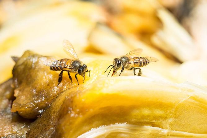 Get Rid Of Household Bugs Fruit Flies, get rid of household bugs, bugs that torment, how to kill bugs, get rid of pests, bugs in my house, pests in my house