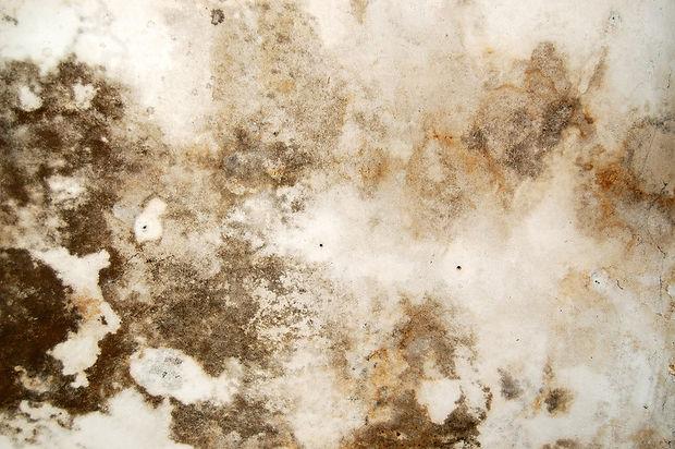 Mold Damage Repair