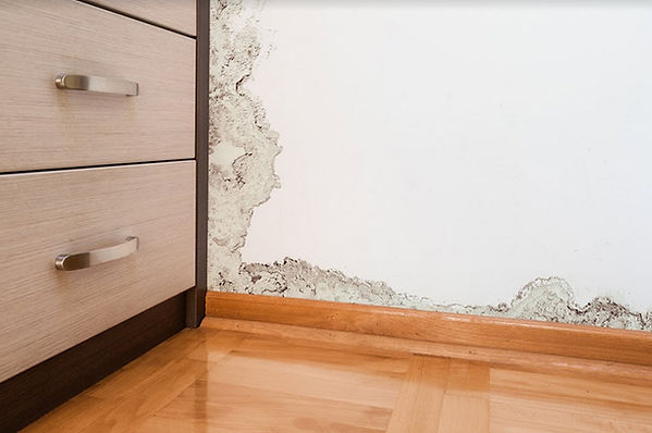 Top Rated Water Damage Cleanup