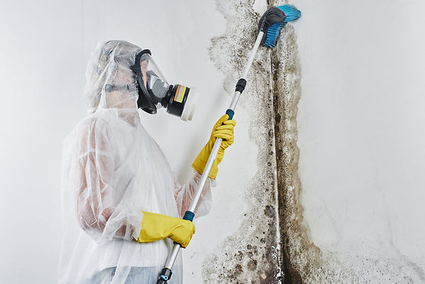 Affordable Mold Remediation 4