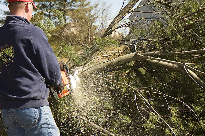 protecting your home against wildfires trim your yard