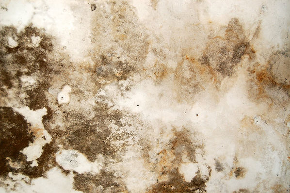 Home Mold Cleanup 4